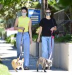 Delilah Amelia Hamlin Out With Their Dogs Los Angeles